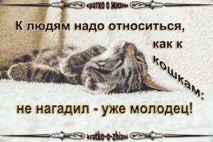 К людям надо относится как к кошкам: не нагадил - уже молодец!