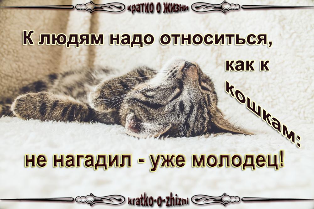 К людям надо относится как к кошкам