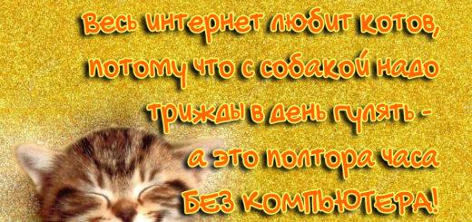 Весь интернет любит котов, потому что с собакой надо трижды в день гулять, а это полтора часа без компьютера!
