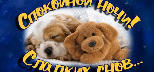Спокойной ночи, сладких снов